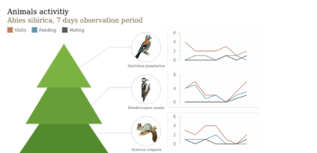 Animals Activity created by AnyChart Team